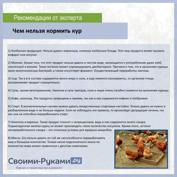 ✅ можно ли кормить кур петрушкой. учимся правильно кормить кур травой: разбираемся, что вредно, а что полезно - cvetochki-ulyanovsk.ru