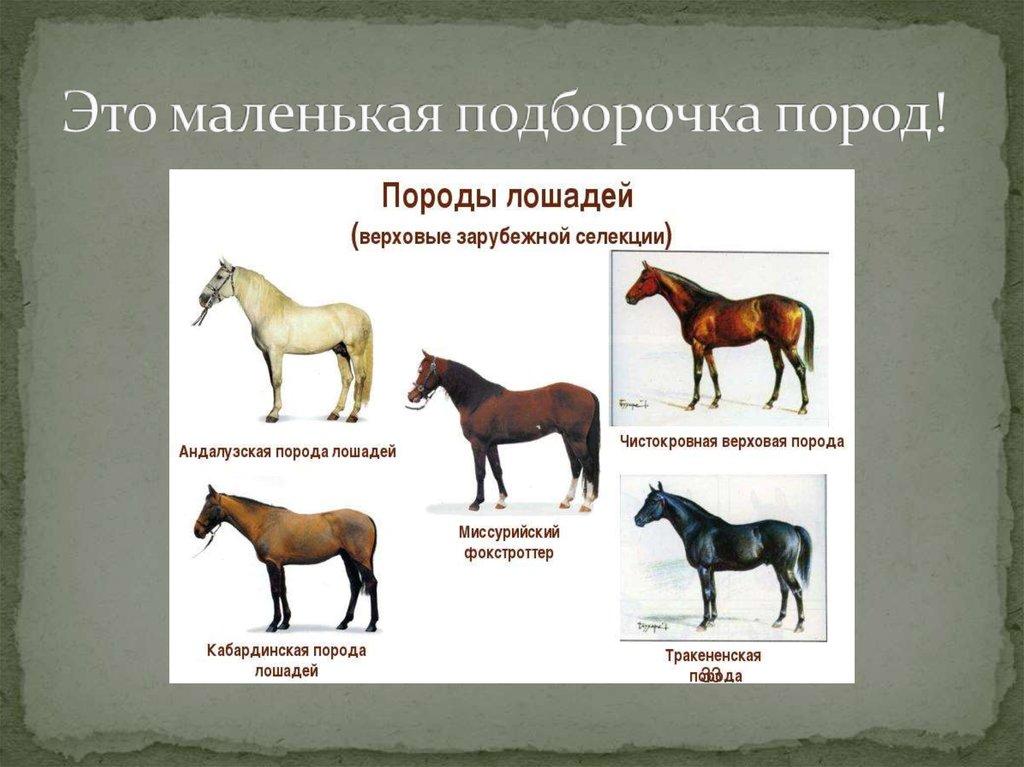 Все породы лошадей с фото и описанием от экспертов