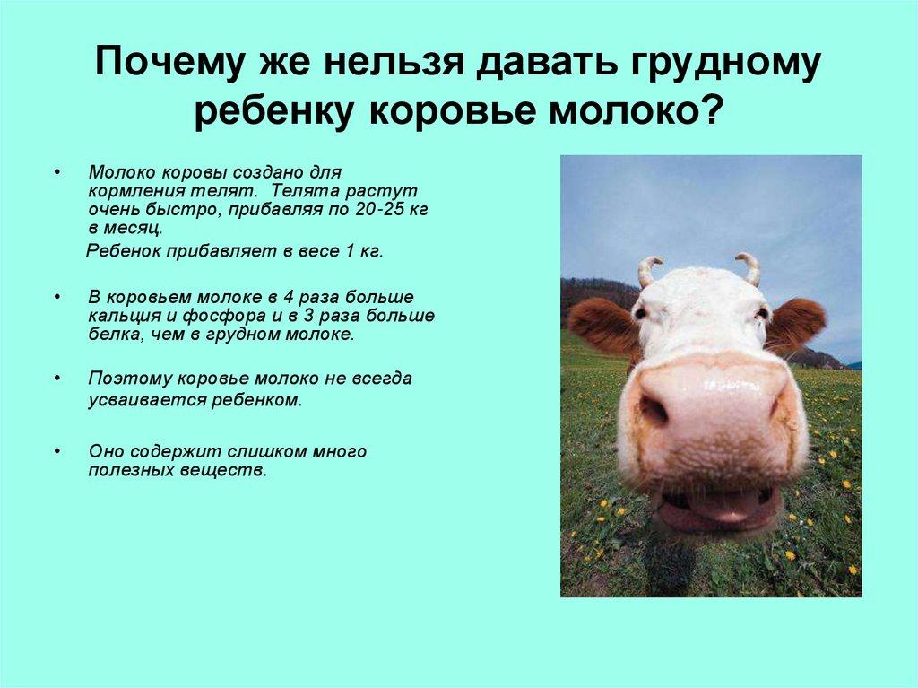 ✅ информация о коровьем молоке: почему молоко пахнет коровой, можно ли пить парное - tehnomir32.ru