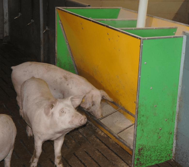 Кормушки для свиней своими руками - инструкция по изготовлению