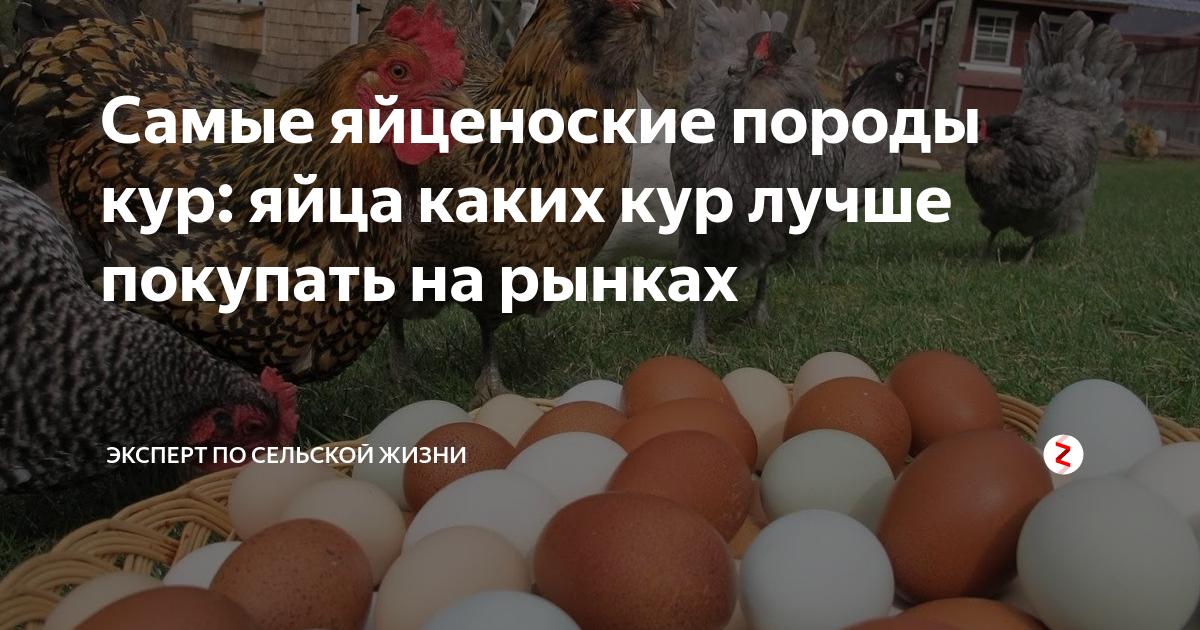 Интересности: 33 факта о курах, курятине и куриных яйцах