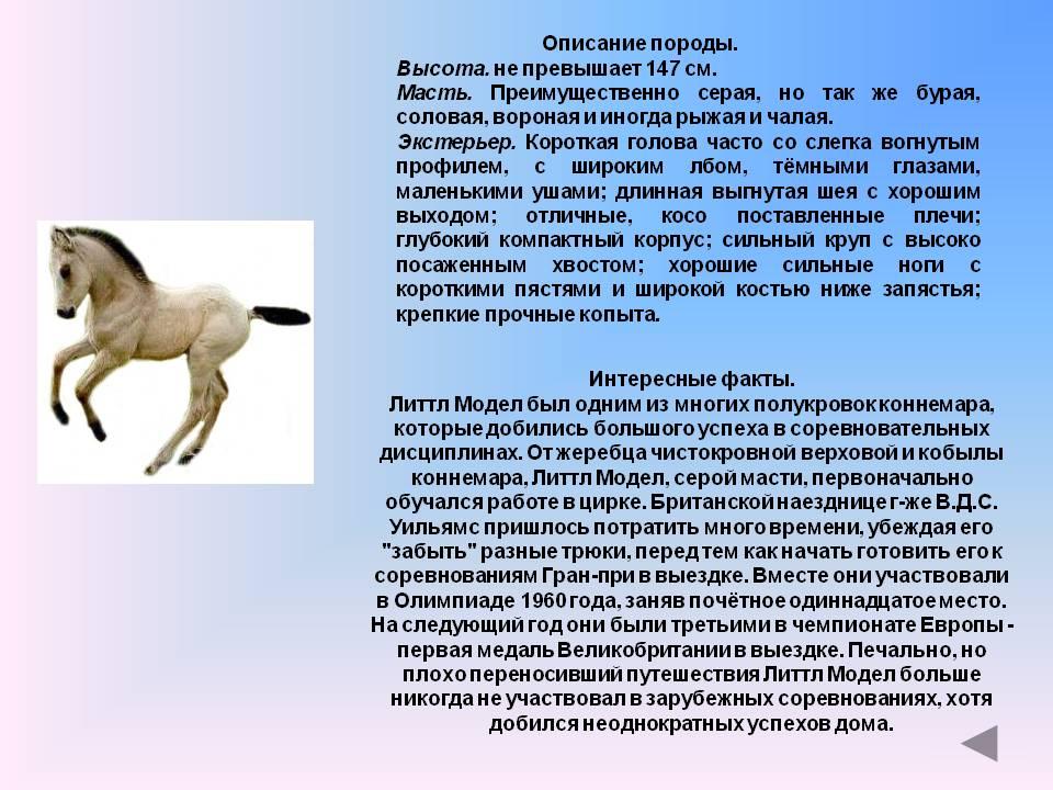 Интересные факты о лошадях: все самое интересное о лошадя, об их жизни