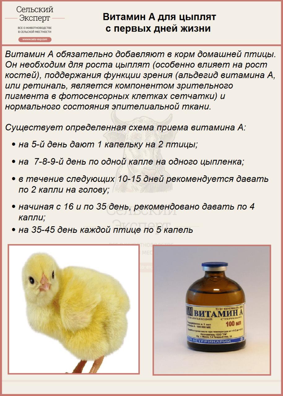Аптечка для цыплят-бройлеров: содержимое, инструкция по применению