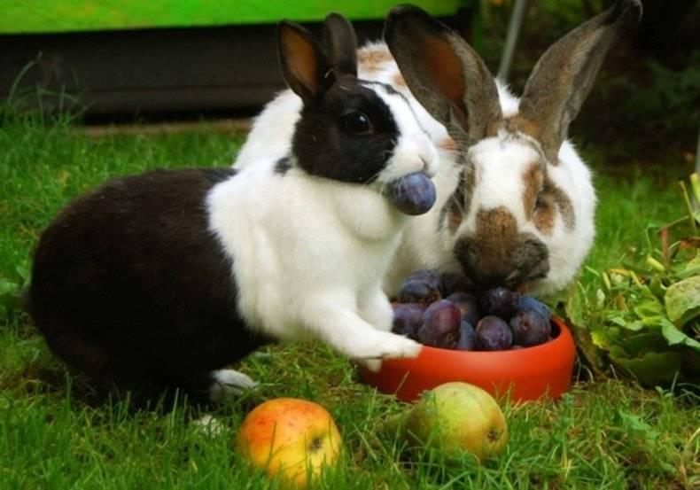 Едят ли кролики свежие огурцы, с какого возраста и в каком количестве?