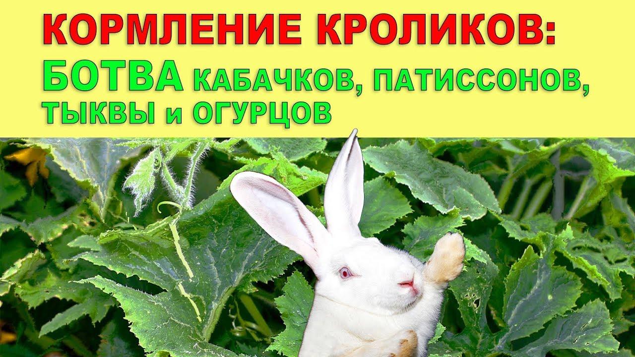 Можно ли кроликам давать тыкву и ее ботву, в каких количествах