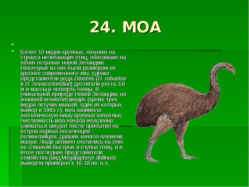 Всё о страусах: особенности поведения, интересные факты взрослому и ребёнку