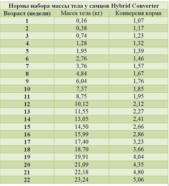 Индюки биг-6 - характеристика породы, выращивание в домашних условиях