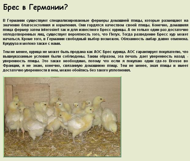 ✅ о породе кур супер ник: описание и характеристика, как отличить пол цыпленка - tehnomir32.ru
