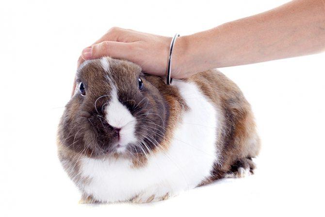 Как приручить кролика к рукам — дрессировка b особенности пород