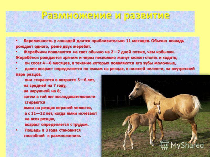 История появления и эволюция конного спорта