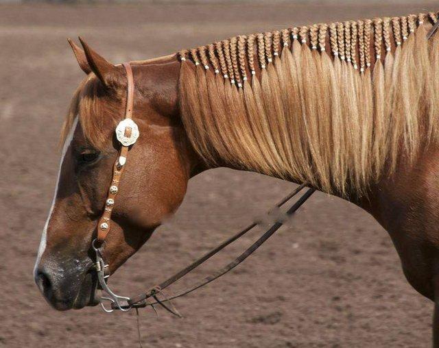 Лошадиный хвост: строение и функции