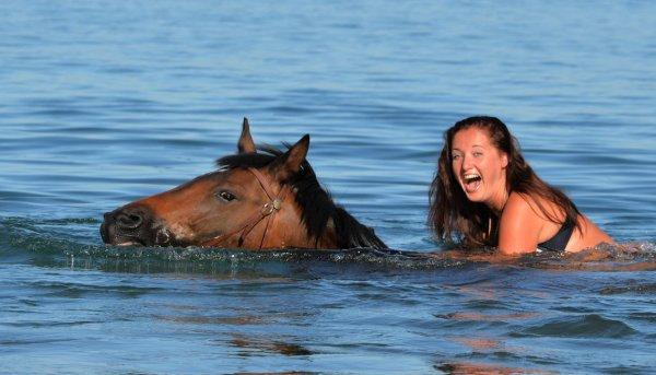 ᐉ умеют ли лошади плавать и нужно ли их обучать?