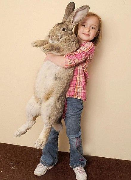 Большие кролики: описание пород кроликов-великанов и особенности содержания