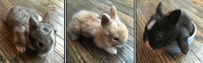 Как часто крольчиха кормит крольчат и как она это делает