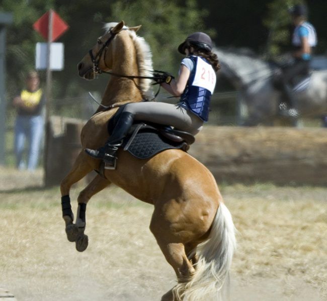 Почему лошадь встает на дыбы, кусается, брыкаться, сбрасывает всадника