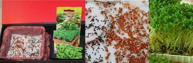 Чем кормить перепелов в домашних условиях — как содержать и выращивать просто и правильно! (95 фото + видео)