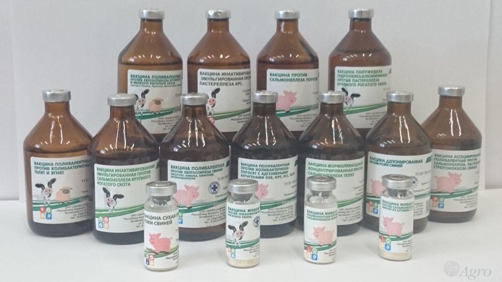 Африканская чума свиней: профилактика