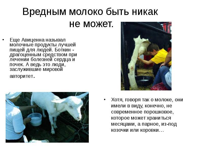 Горькое молоко у коровы – как устранить