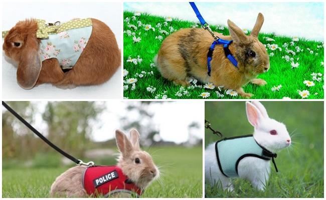 Шлейка для кролика: как выбрать, как надеть, как сделать поводок своими руками