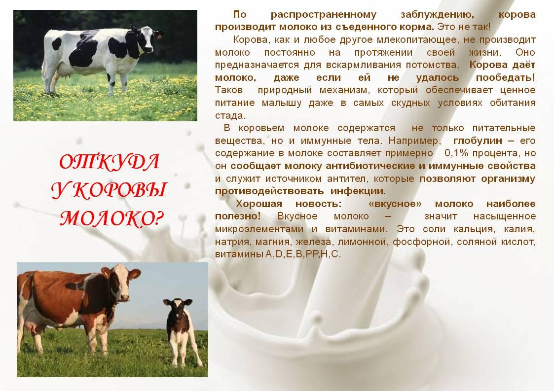 Парное молоко: что это такое можно ли его пить, вред и польза, может ли быть опасно