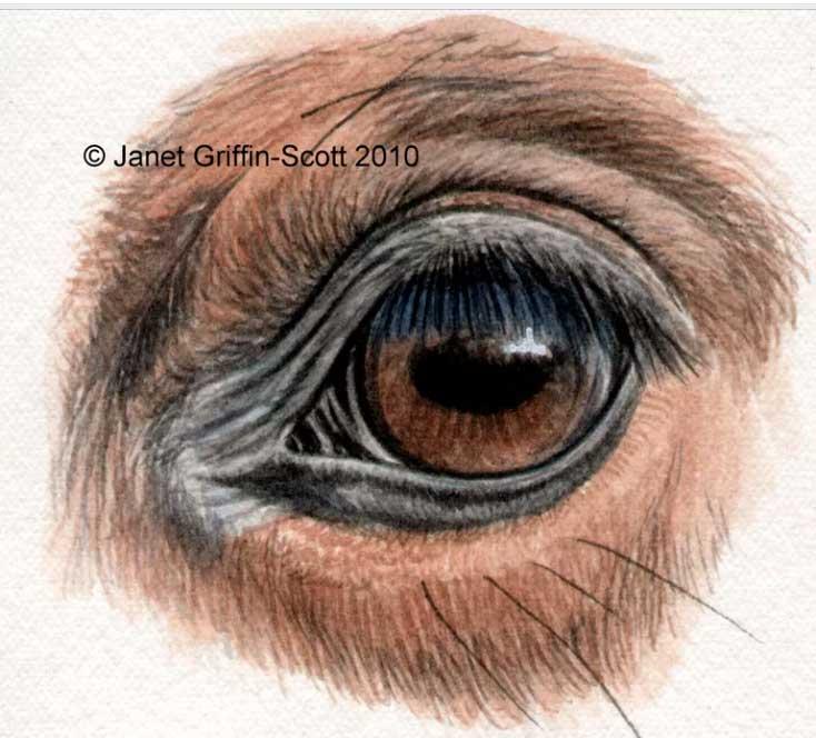 ᐉ зачем лошадям закрывают глаза по бокам, шоры на глазах - zoo-mamontenok.ru