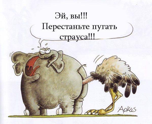 Прячет ли страус голову в песок: рассматриваем самые популярные мифы