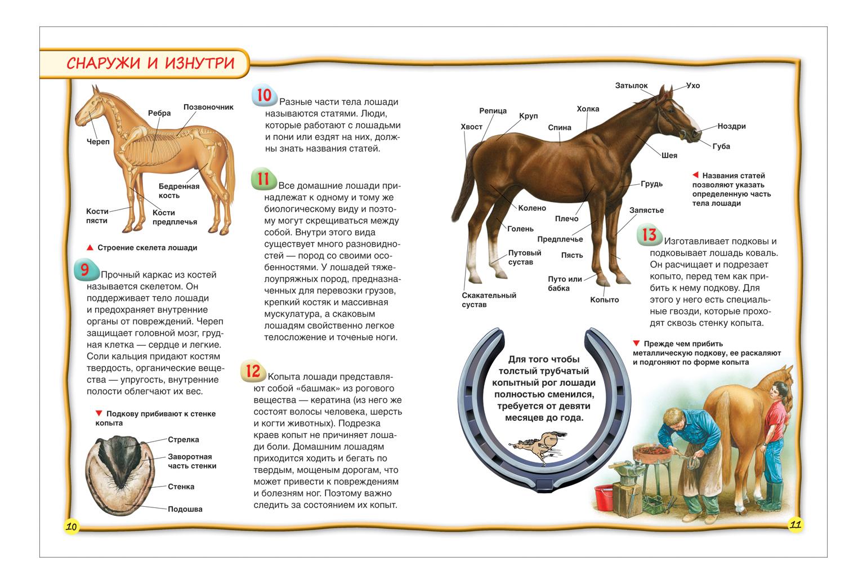 Самые интересные факты о лошадях | мои лошадки