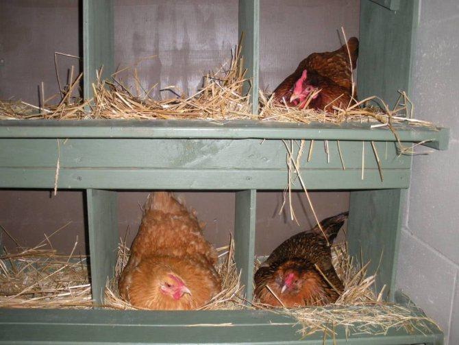 Скажем «стоп» расклеву яиц: разбираем все возможные причины