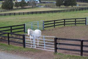 Сколько стоит содержать лошадь