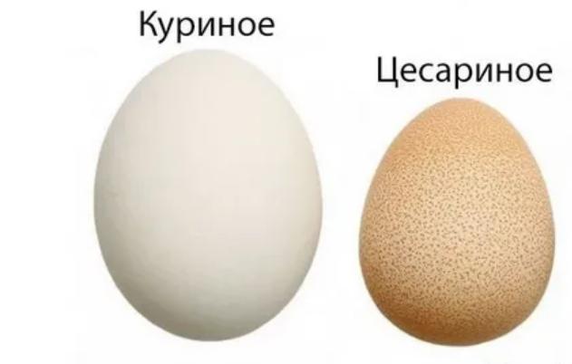Яйца цесарок: польза и вред и как готовить