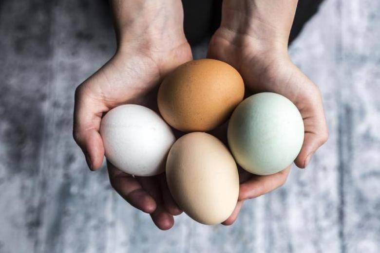 Почему куриные яйца бывают разного цвета и какие лучше выбирать?