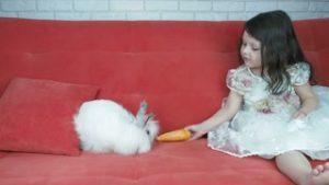 Как ухаживать за декоративным кроликом и как правильно стричь когти