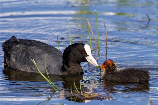 Птицы кубани. описание, названия, виды и фото птиц | животный мир