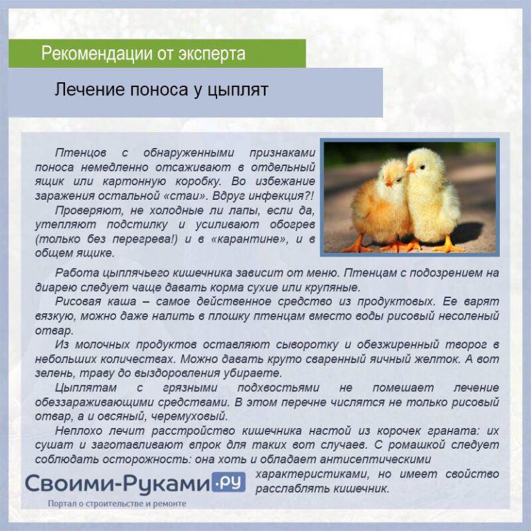 Чем лечить понос у бройлеров. причины, лечение и диагностика диареи у цыплят. расстройство желудка у кур