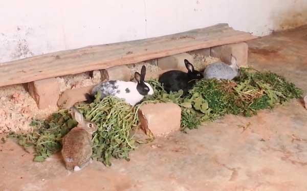 Декоративный кролик — плюсы и минусы домашнего питомца. уход, фото — ботаничка.ru