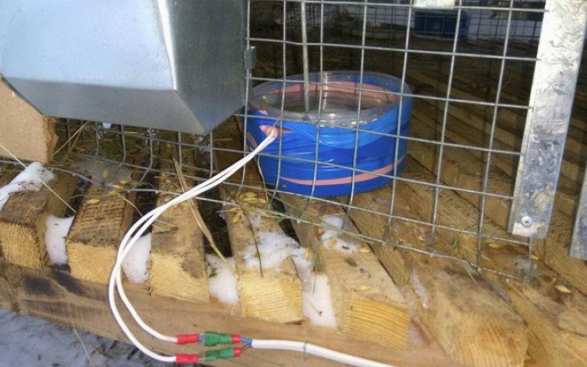 Окрол кроликов зимой: утепление маточника, рацион и другие факторы