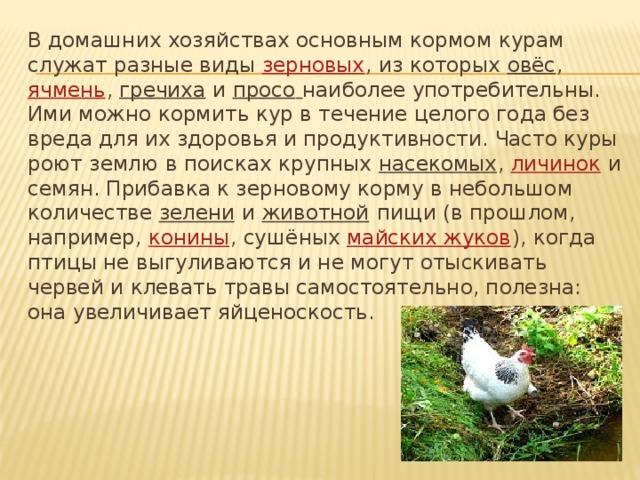 Кормление коз — чем кормить и что опасно для козы