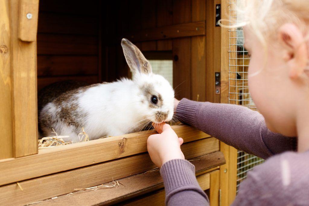 """""""почему кролики грызут клетки и что делать"""" - зеленый огород"""
