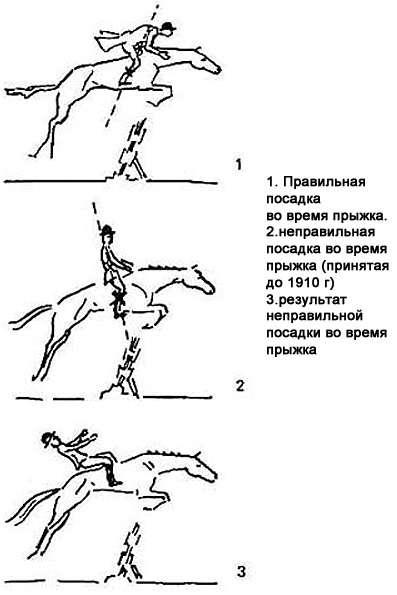 Похудей, не вставая... с лошади! чем полезен конный спорт | здоровая жизнь | здоровье