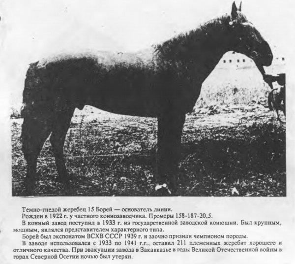 Карачаевская порода кавказских лошадей