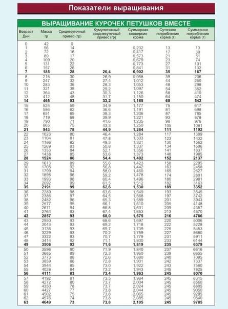 Бройлеры кобб 500: описание породы, выращивание, отзывы