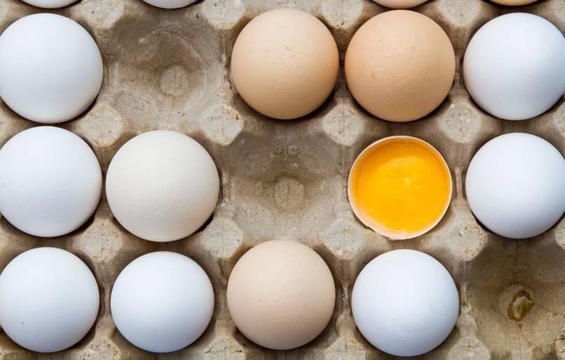 От чего зависит цвет куриного яйца ? животные ? другое
