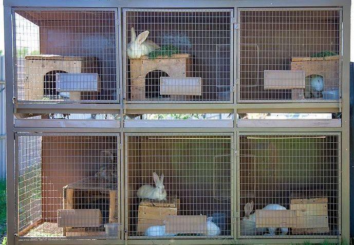 Клетки для кроликов своими руками, размеры, чертежи: инструкция