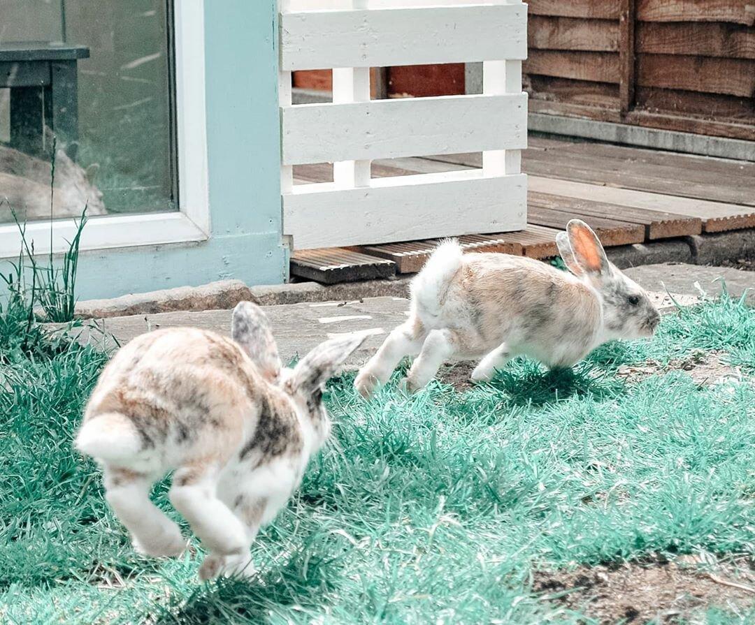 ᐉ почему кролики стучат задними лапами? - zoomanji.ru