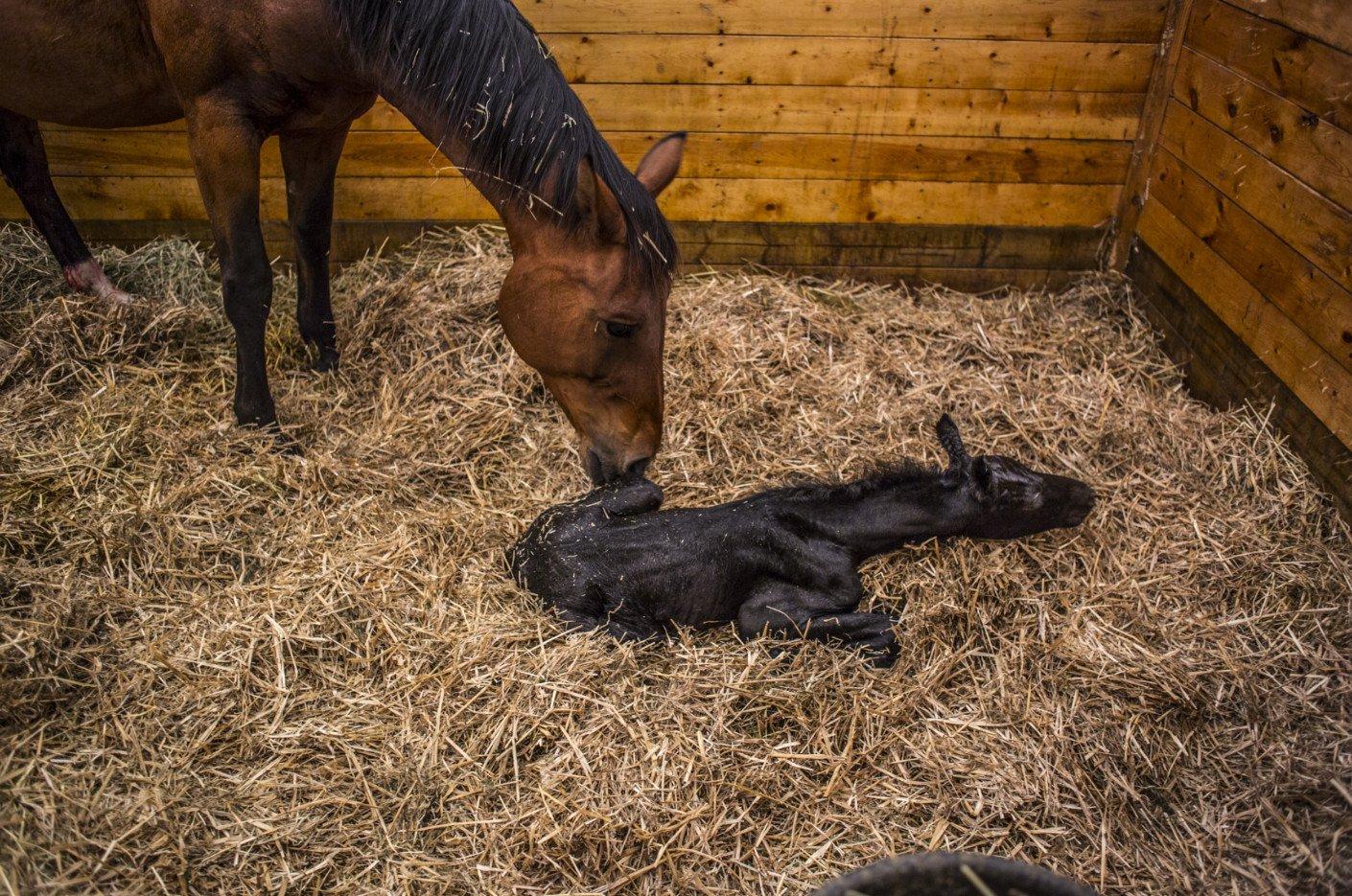 Что едят лошади: кормление, описание процесса, рацион