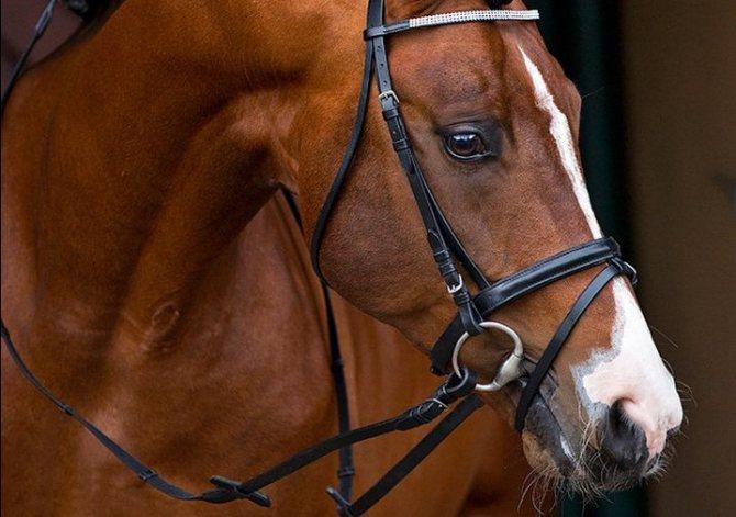 Недоуздок для лошади: строение и назначение, виды уздечки, инструкция по изготовлению своими руками