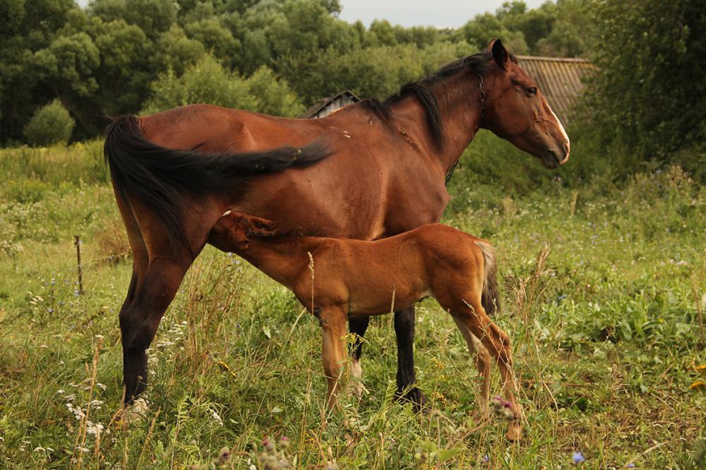 Кормление лошадей: подробное руководство и рацион
