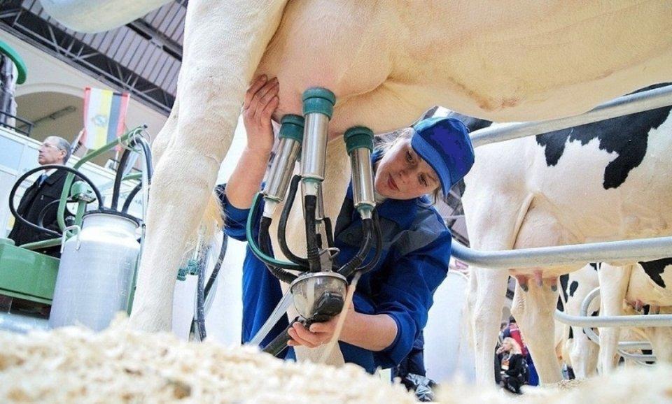 О доильном аппарате: технология доения коров в домашних условиях
