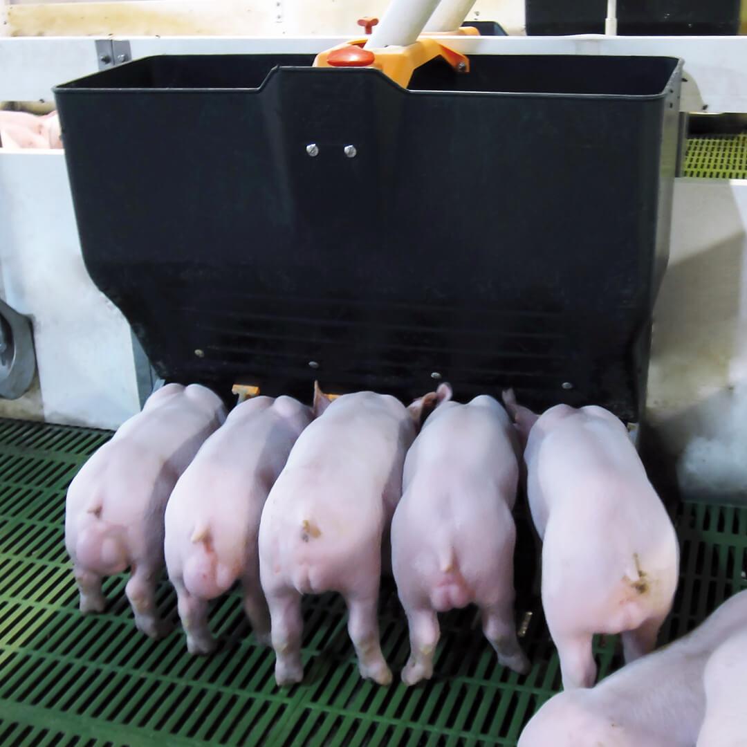 Как сделать корыто для свиней из дерева - сад и огород