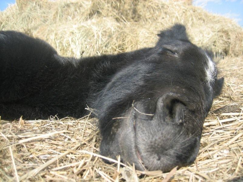 Как в действительности спят лошади чтобы полноценно отдохнуть